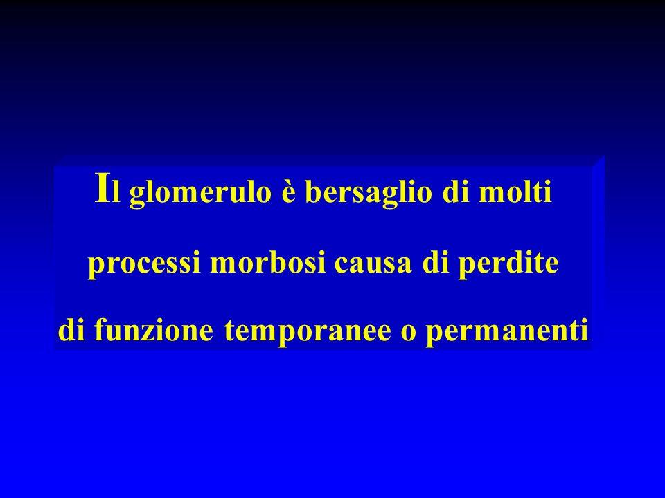 I l glomerulo è bersaglio di molti processi morbosi causa di perdite di funzione temporanee o permanenti