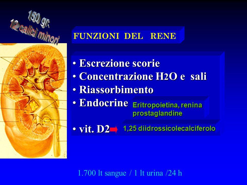 FUNZIONI DEL RENE Escrezione scorie Escrezione scorie Concentrazione H 2 O e sali Concentrazione H 2 O e sali Riassorbimento Riassorbimento Endocrine