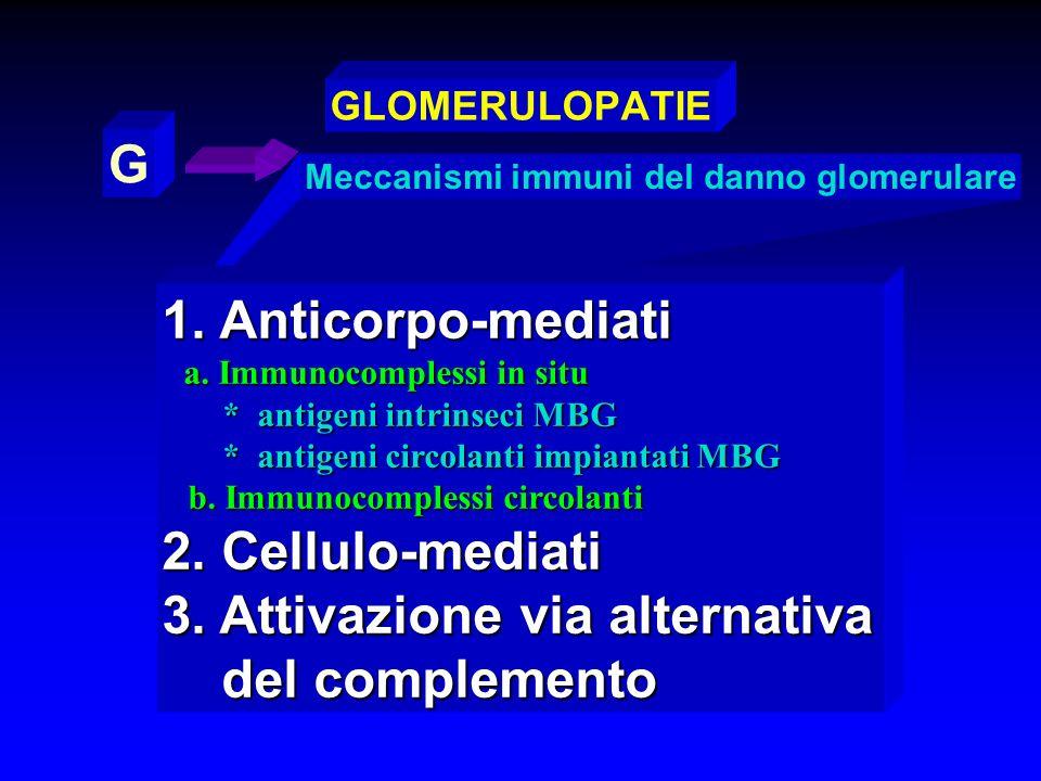 Meccanismi immuni del danno glomerulare G GLOMERULOPATIE 1. Anticorpo-mediati a. Immunocomplessi in situ a. Immunocomplessi in situ * antigeni intrins