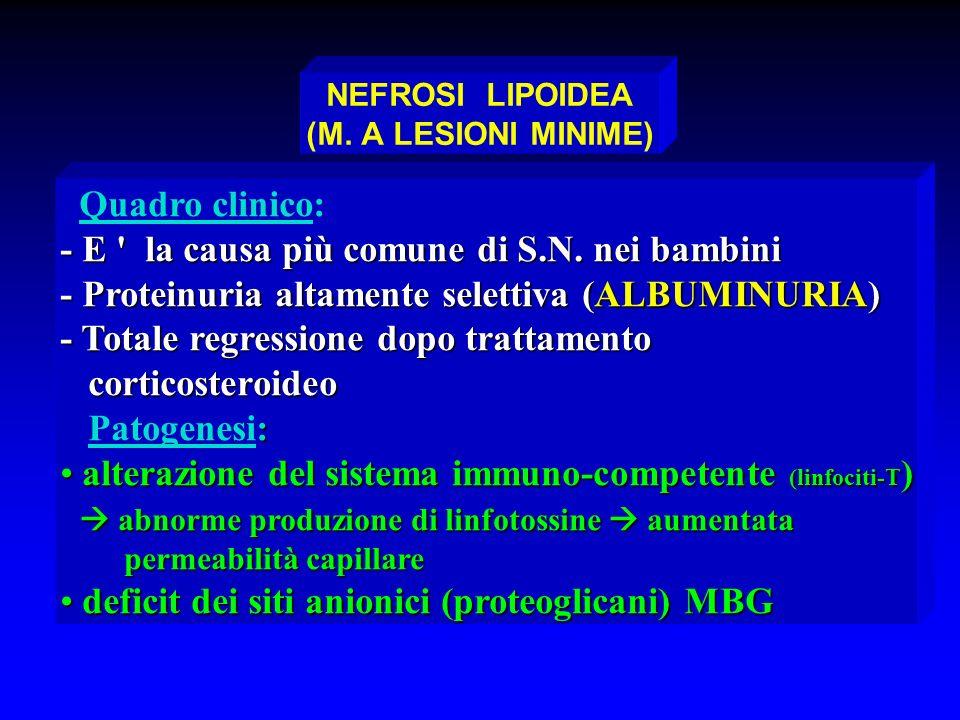 NEFROSI LIPOIDEA (M. A LESIONI MINIME) Quadro clinico: - E ' la causa più comune di S.N. nei bambini - Proteinuria altamente selettiva (ALBUMINURIA) -