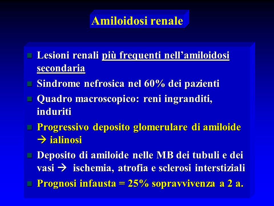 Amiloidosi renale n Lesioni renali più frequenti nellamiloidosi secondaria n Sindrome nefrosica nel 60% dei pazienti n Quadro macroscopico: reni ingra
