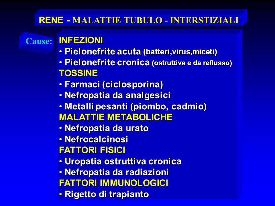 MALATTIE TUBULO - INTERSTIZIALI RENE - MALATTIE TUBULO - INTERSTIZIALI INFEZIONI Pielonefrite acuta (batteri,virus,miceti) Pielonefrite acuta (batteri