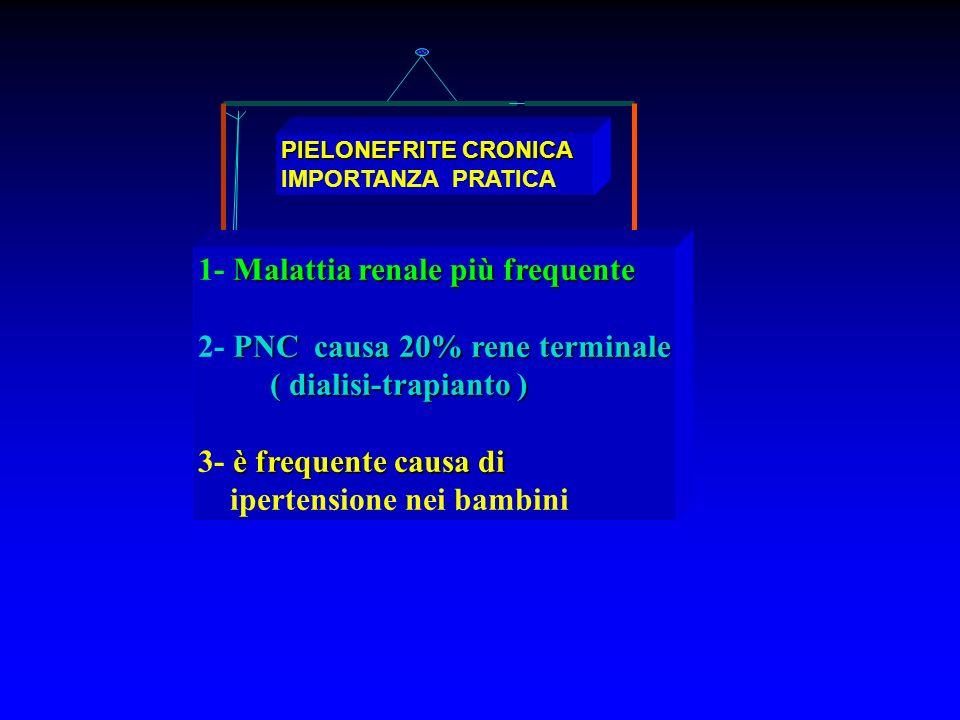 PIELONEFRITE CRONICA IMPORTANZA PRATICA Malattia renale più frequente 1- Malattia renale più frequente PNC causa 20% rene terminale 2- PNC causa 20% r