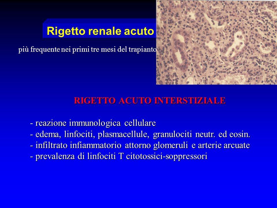 Rigetto renale acuto RIGETTO ACUTO INTERSTIZIALE reazione immunologica cellulare - reazione immunologica cellulare - edema, linfociti, plasmacellule,