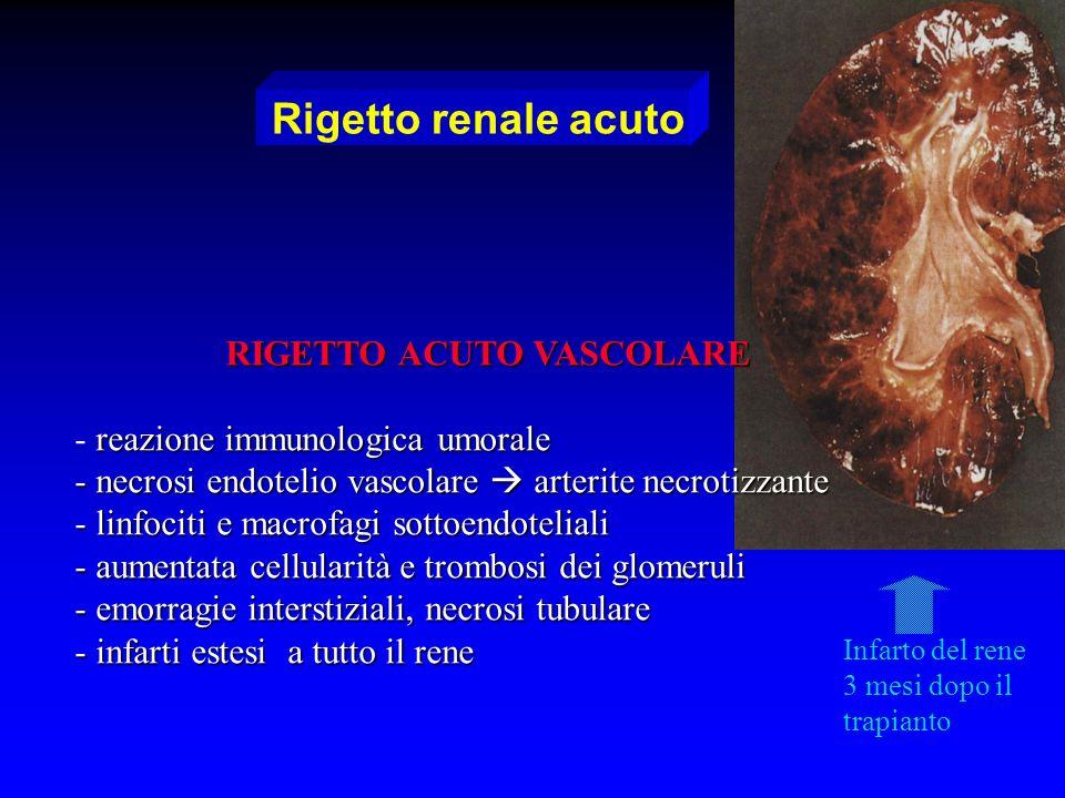 Rigetto renale acuto RIGETTO ACUTO VASCOLARE reazione immunologica umorale - reazione immunologica umorale - necrosi endotelio vascolare arterite necr