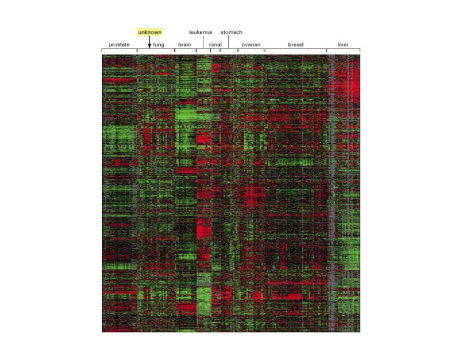 I dati ottenuti con lanalisi degli RNA sottostimano le reali differenze tra i profili di proteine presenti nei differenti tipi cellulari