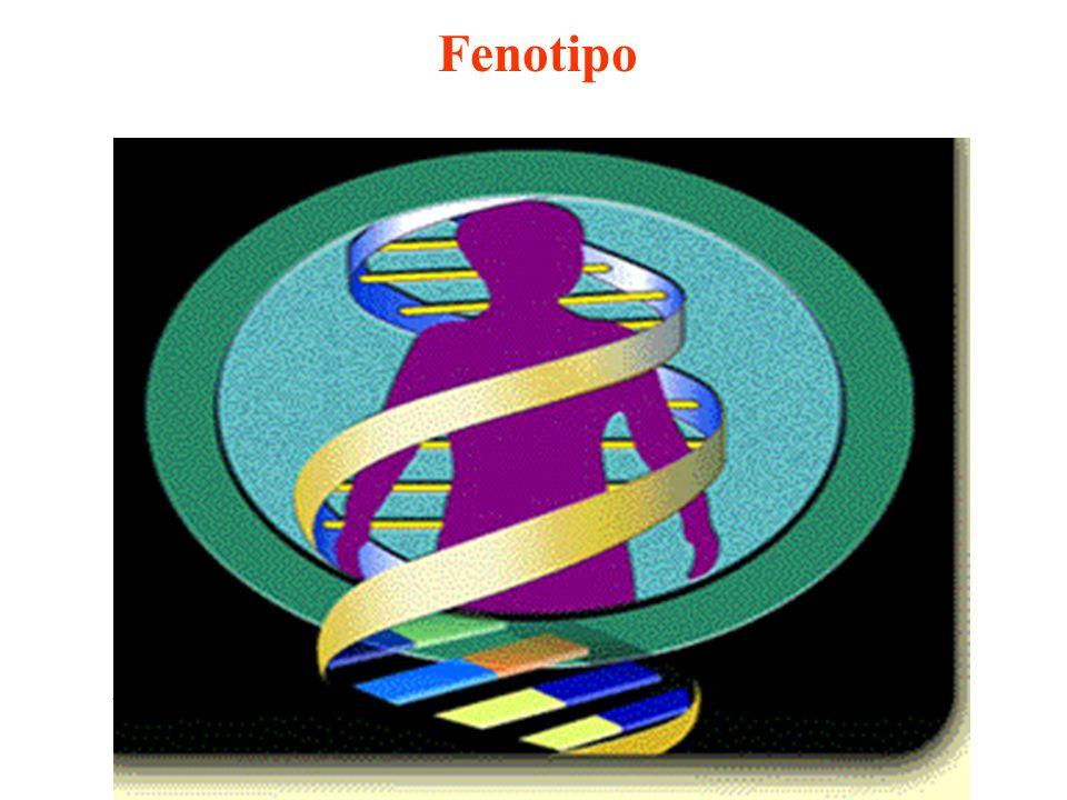 Il differenziamento è il processo mediante il quale una cellula diventa diversa dalla sua progenitrice e dalle altre cellule figlie della stessa progenitrice.