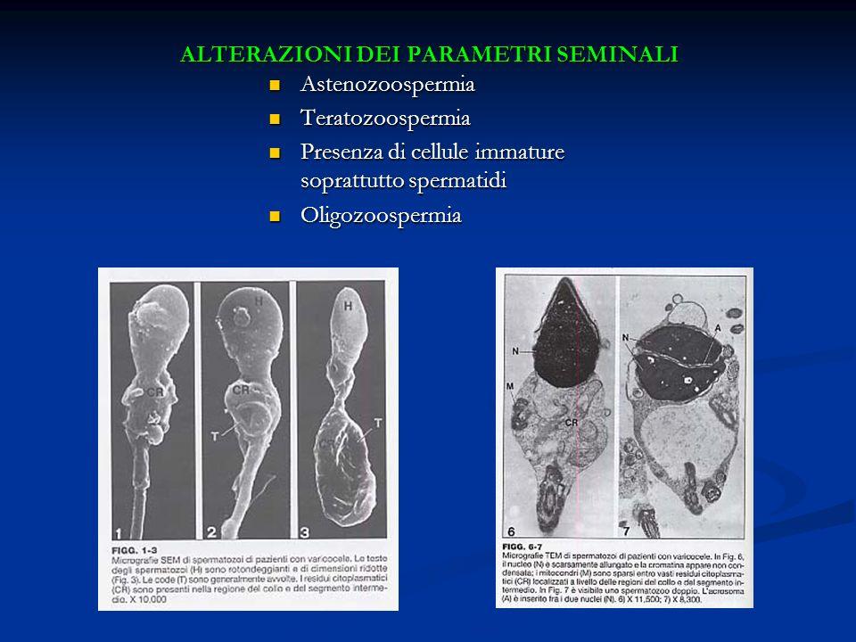ALTERAZIONI DEI PARAMETRI SEMINALI Astenozoospermia Astenozoospermia Teratozoospermia Teratozoospermia Presenza di cellule immature soprattutto sperma