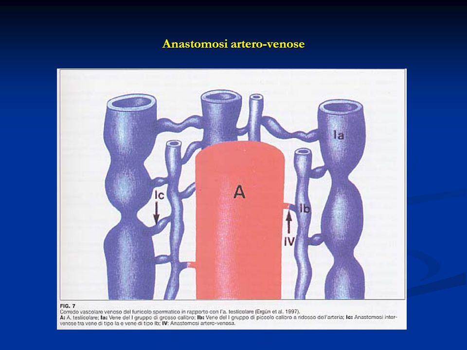 Anastomosi artero-venose