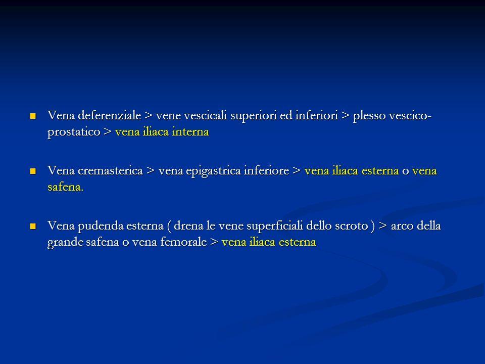 Vena deferenziale > vene vescicali superiori ed inferiori > plesso vescico- prostatico > vena iliaca interna Vena deferenziale > vene vescicali superi