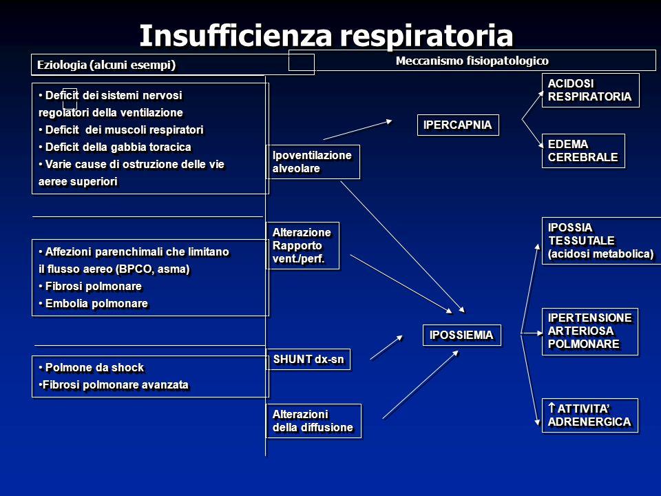 Insufficienza respiratoria Insufficienza respiratoria Meccanismo fisiopatologico Eziologia (alcuni esempi) IPERCAPNIAIPERCAPNIA IPOSSIEMIAIPOSSIEMIA A