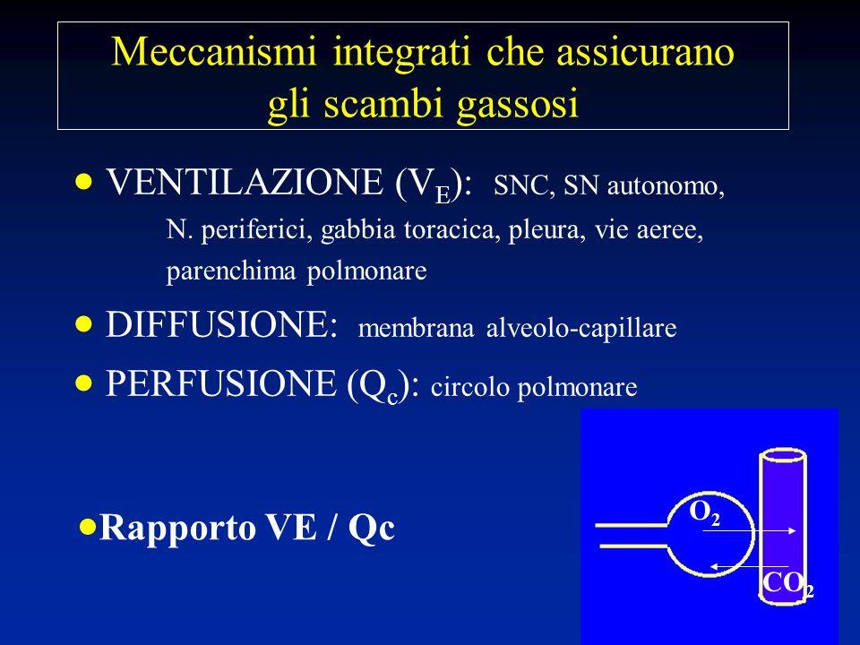 Meccanismi integrati che assicurano gli scambi gassosi VENTILAZIONE (V E ): SNC, SN autonomo, N. periferici, gabbia toracica, pleura, vie aeree, paren