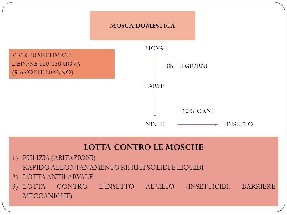 MOSCA DOMESTICA VIV 8-10 SETTIMANE DEPONE 120-150 UOVA (5-6 VOLTE L0ANNO) UOVA 8h – 3 GIORNI LARVE NINFEINSETTO 10 GIORNI LOTTA CONTRO LE MOSCHE 1)PUL