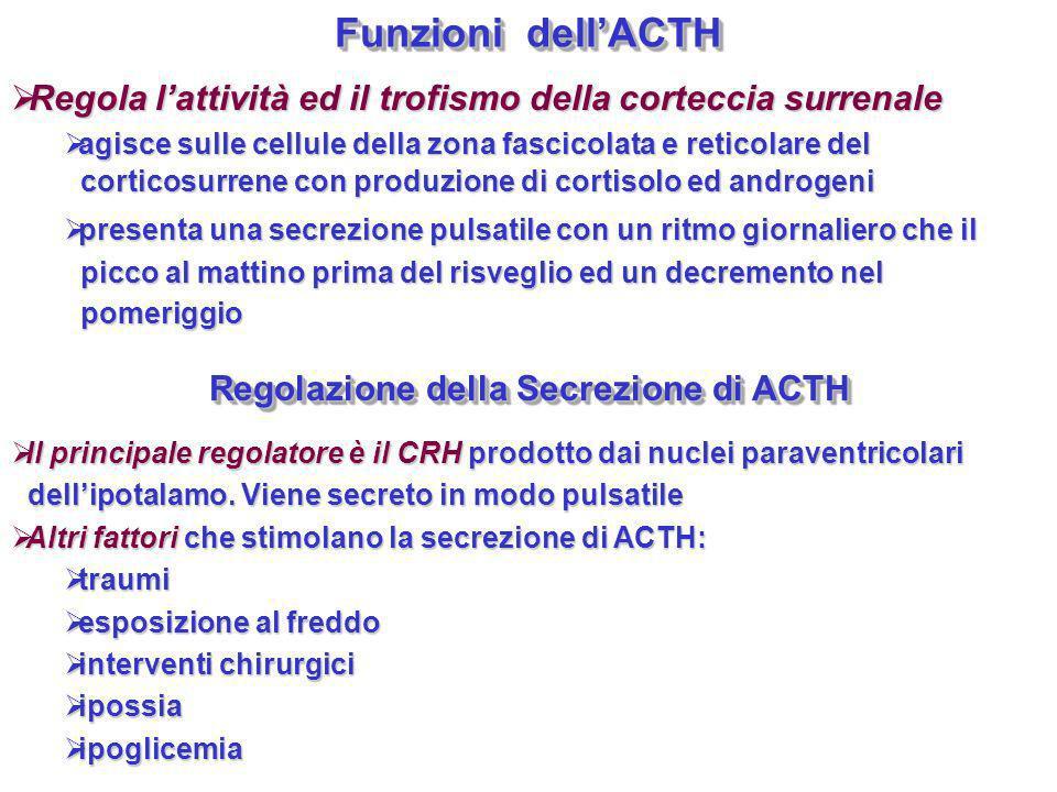Funzioni dellACTH Regola lattività ed il trofismo della corteccia surrenale Regola lattività ed il trofismo della corteccia surrenale agisce sulle cel