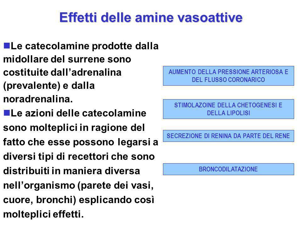 Effetti delle amine vasoattive Le catecolamine prodotte dalla midollare del surrene sono costituite dalladrenalina (prevalente) e dalla noradrenalina.