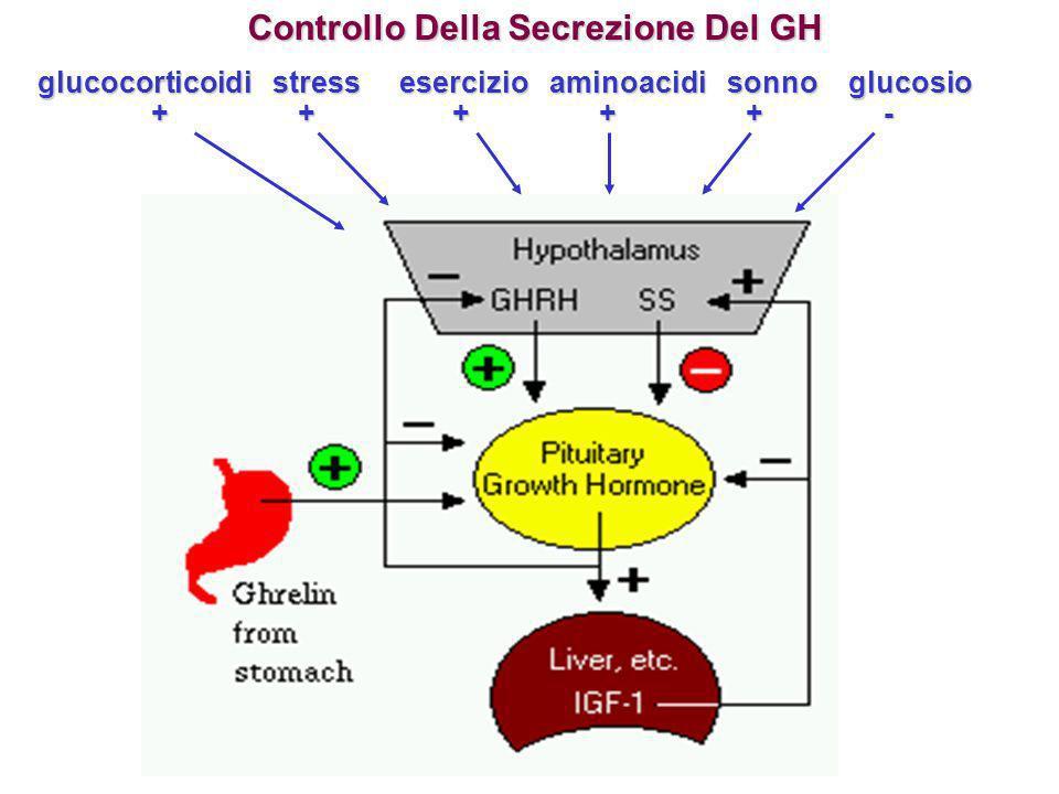 Controllo Della Secrezione Del GH glucocorticoidi stress esercizio aminoacidi sonno glucosio + + + + + - + + + + + -