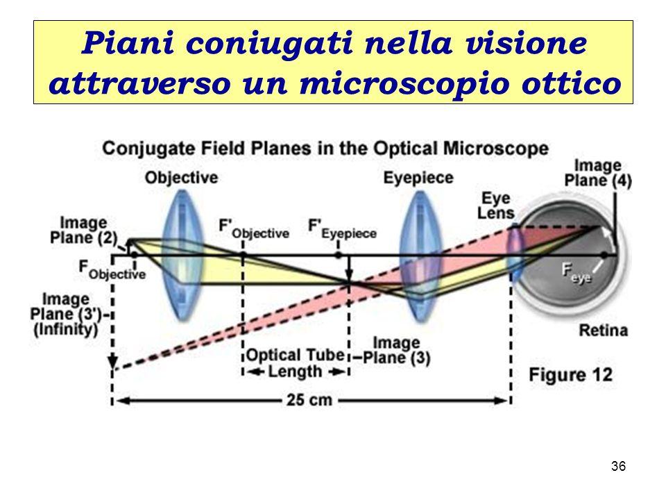Piani coniugati nella visione attraverso un microscopio ottico 36