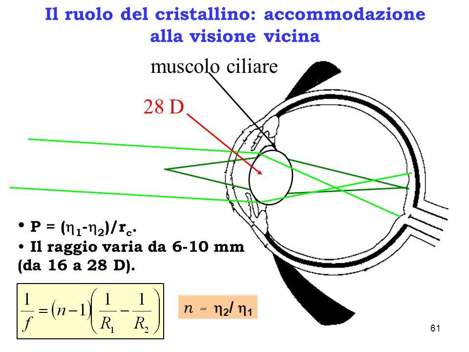 Il ruolo del cristallino: accommodazione alla visione vicina 28 D P = ( 1 - 2 )/r c. Il raggio varia da 6-10 mm (da 16 a 28 D). muscolo ciliare n = 2