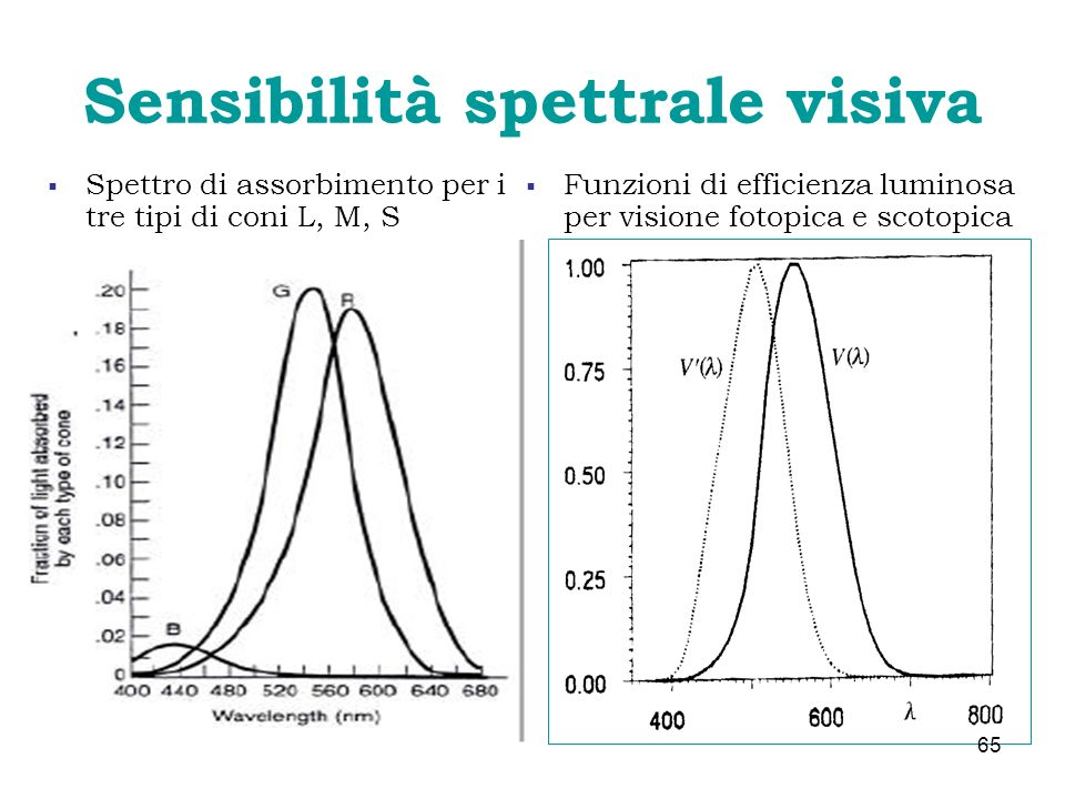 Sensibilità spettrale visiva Spettro di assorbimento per i tre tipi di coni L, M, S Funzioni di efficienza luminosa per visione fotopica e scotopica 6