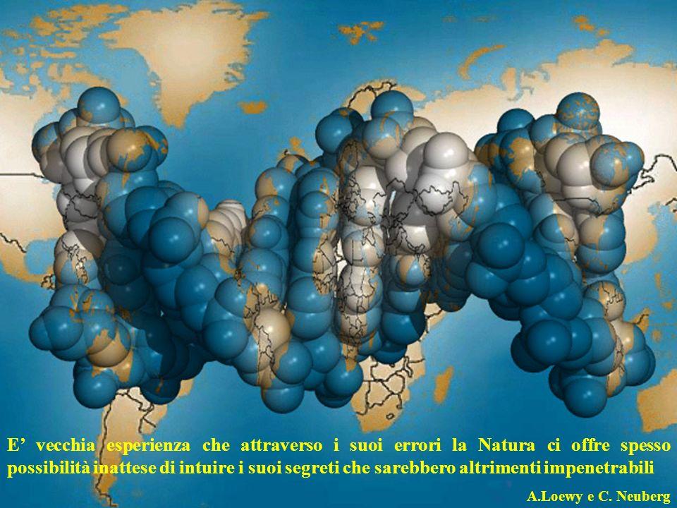 Effetto di alcune mutazioni sullmRNA e sulla proteina