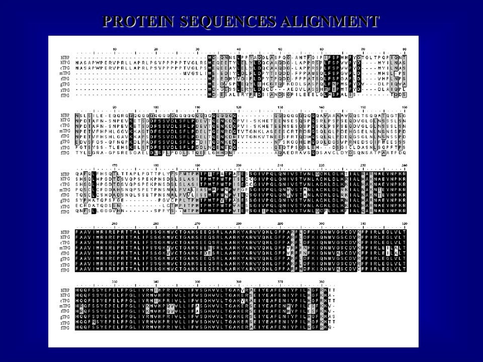 PROTEIN SEQUENCES ALIGNMENT