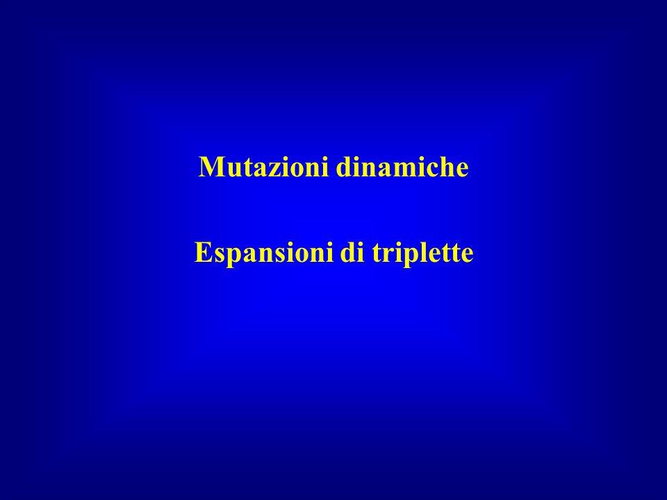 Mutazioni dinamiche Espansioni di triplette
