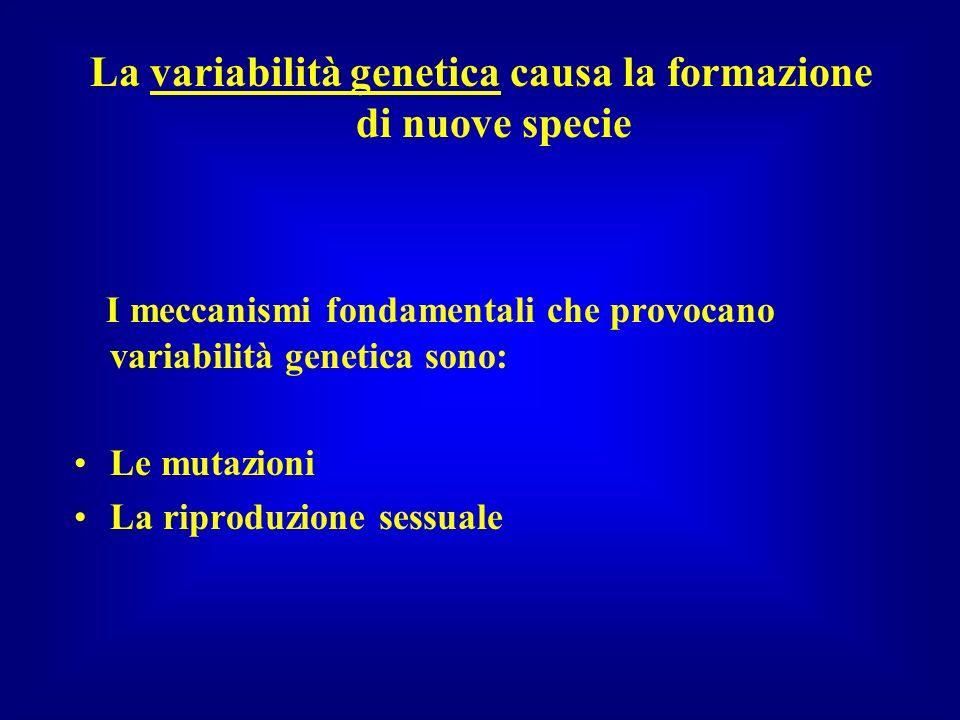 La variabilità genetica causa la formazione di nuove specie I meccanismi fondamentali che provocano variabilità genetica sono: Le mutazioni La riprodu