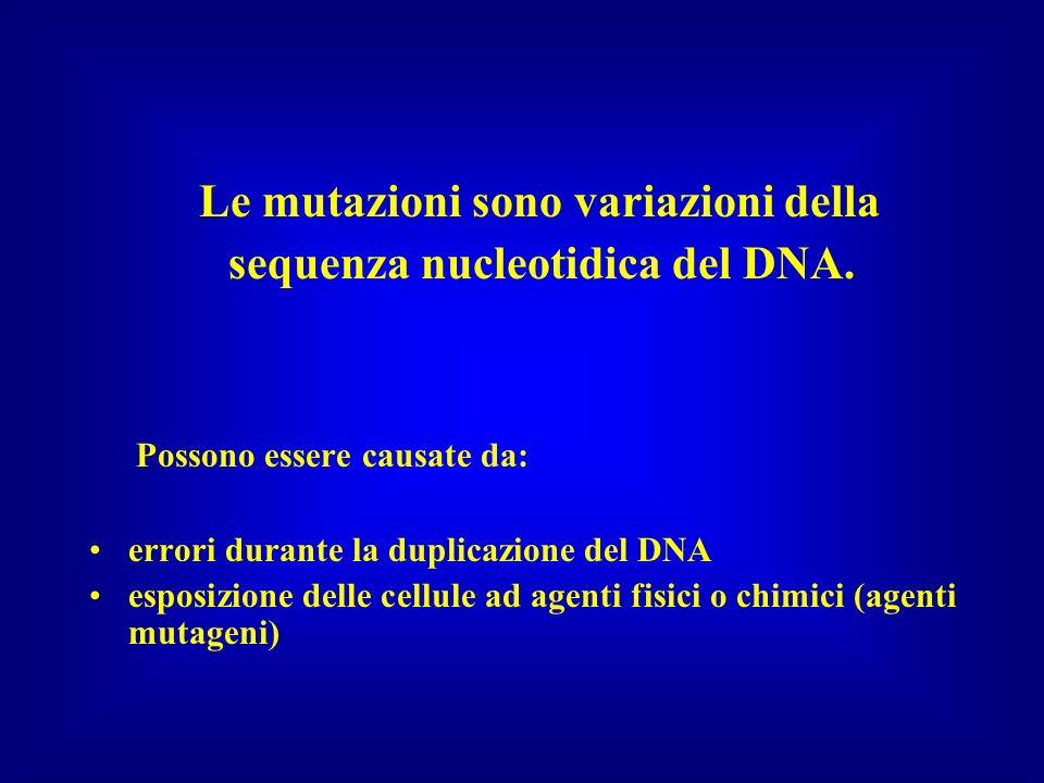 Le mutazioni sono variazioni della sequenza nucleotidica del DNA. Possono essere causate da: errori durante la duplicazione del DNA esposizione delle
