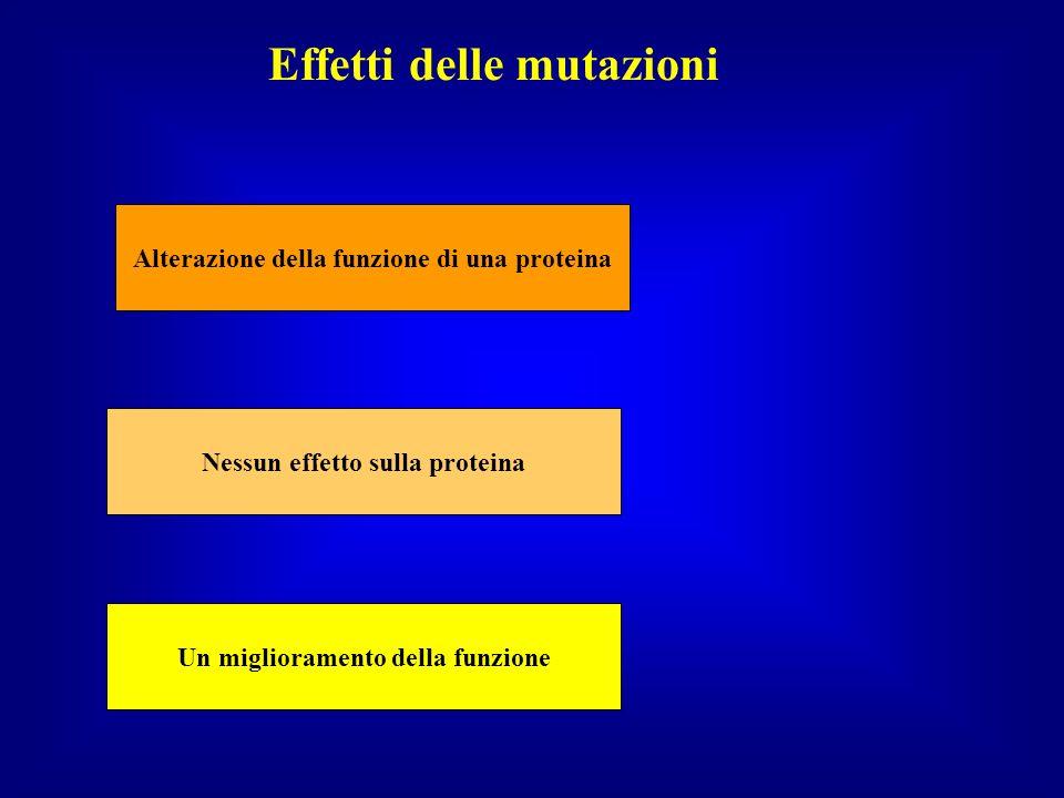 Le conseguenze che una mutazione genica avrà sullorganismo dipendono: Da quando è cambiata la sequenza aminoacidica della proteina; Dalla variazione quantitativa