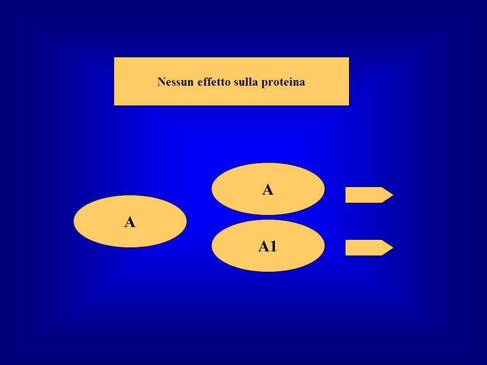 A A Nessun effetto sulla proteina