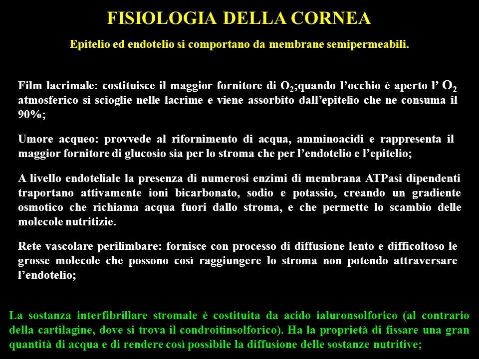 FISIOLOGIA DELLA CORNEA La sostanza interfibrillare stromale è costituita da acido ialuronsolforico (al contrario della cartilagine, dove si trova il