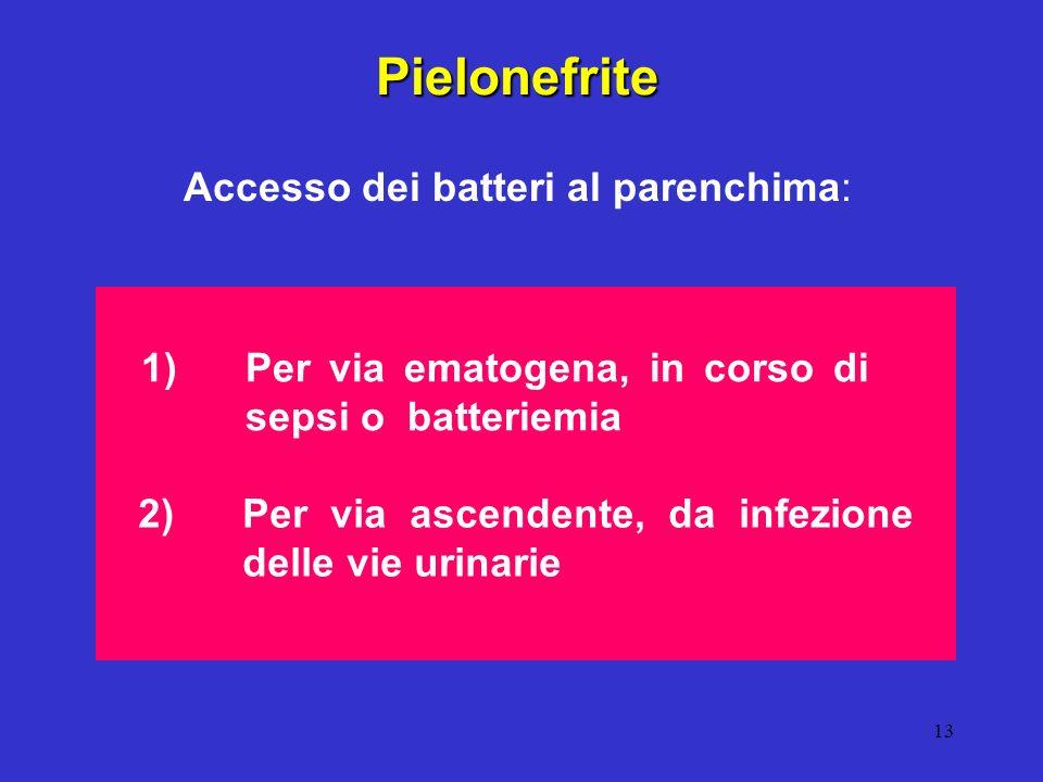 13 Pielonefrite Accesso dei batteri al parenchima: 1) Per via ematogena, in corso di sepsi o batteriemia 2) Per via ascendente, da infezione delle vie