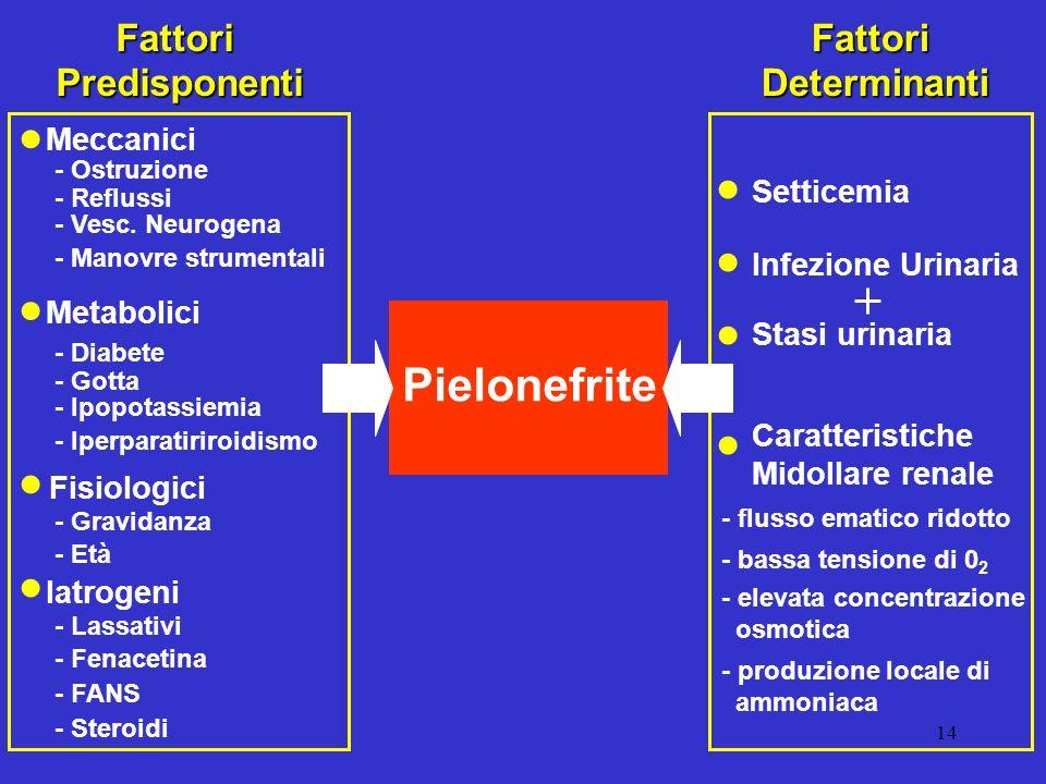 14 FattoriPredisponenti Meccanici Metabolici Fisiologici Pielonefrite FattoriDeterminanti Iatrogeni - Ostruzione - Reflussi - Vesc. Neurogena - Manovr