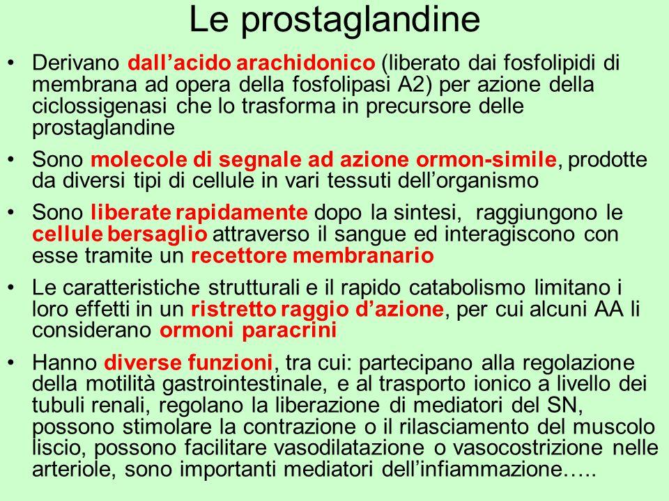 Le prostaglandine Derivano dallacido arachidonico (liberato dai fosfolipidi di membrana ad opera della fosfolipasi A2) per azione della ciclossigenasi