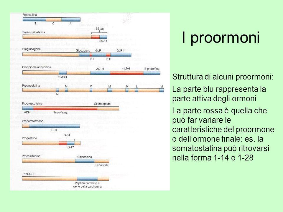 I proormoni Struttura di alcuni proormoni: La parte blu rappresenta la parte attiva degli ormoni La parte rossa è quella che può far variare le caratt