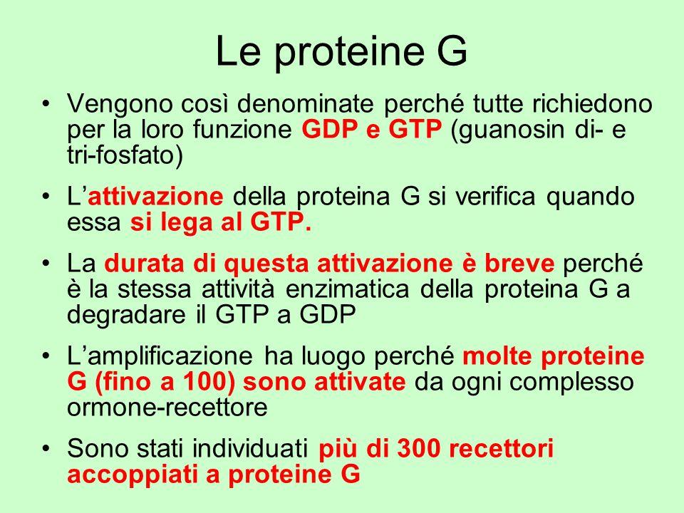 Le proteine G Vengono così denominate perché tutte richiedono per la loro funzione GDP e GTP (guanosin di- e tri-fosfato) Lattivazione della proteina