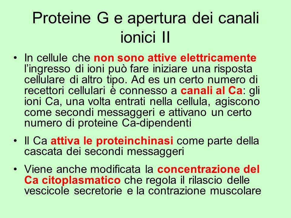 Proteine G e apertura dei canali ionici II In cellule che non sono attive elettricamente lingresso di ioni può fare iniziare una risposta cellulare di