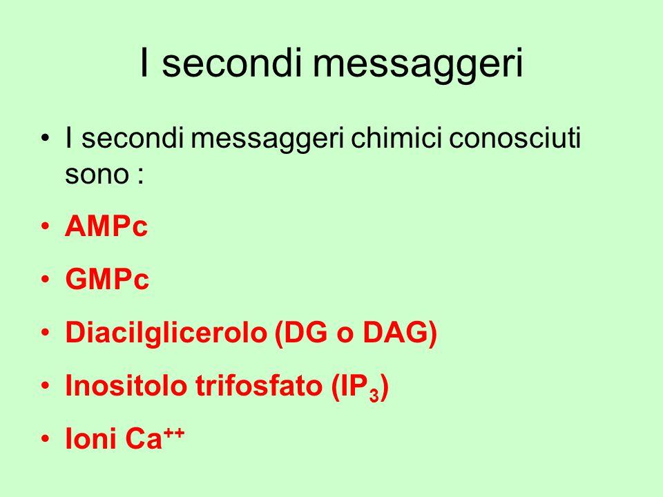 I secondi messaggeri I secondi messaggeri chimici conosciuti sono : AMPc GMPc Diacilglicerolo (DG o DAG) Inositolo trifosfato (IP 3 ) Ioni Ca ++