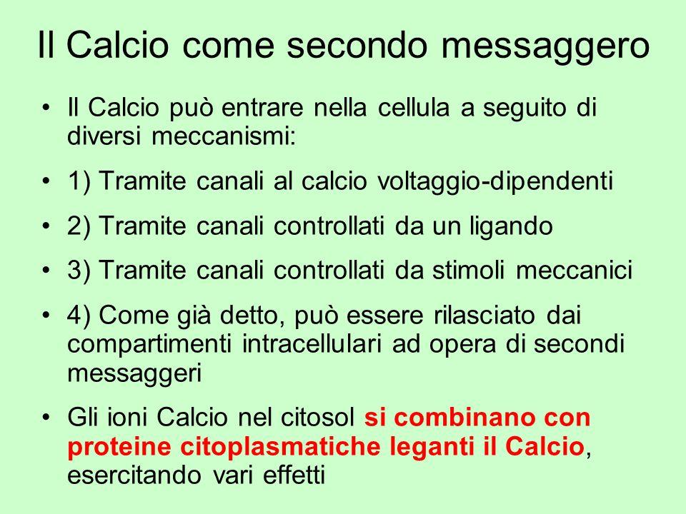 Il Calcio come secondo messaggero Il Calcio può entrare nella cellula a seguito di diversi meccanismi: 1) Tramite canali al calcio voltaggio-dipendent