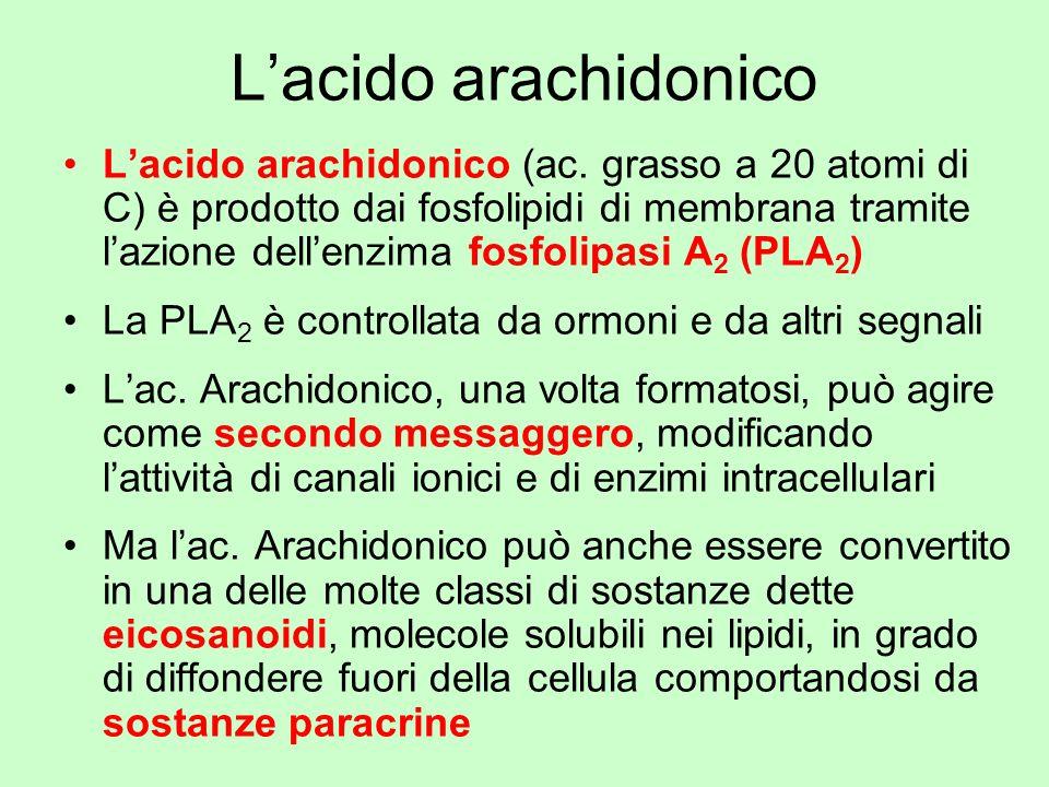 Lacido arachidonico Lacido arachidonico (ac. grasso a 20 atomi di C) è prodotto dai fosfolipidi di membrana tramite lazione dellenzima fosfolipasi A 2