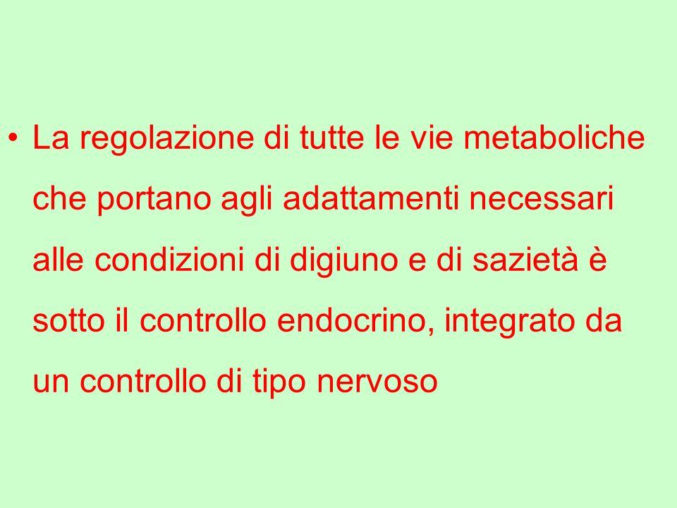 La regolazione di tutte le vie metaboliche che portano agli adattamenti necessari alle condizioni di digiuno e di sazietà è sotto il controllo endocri