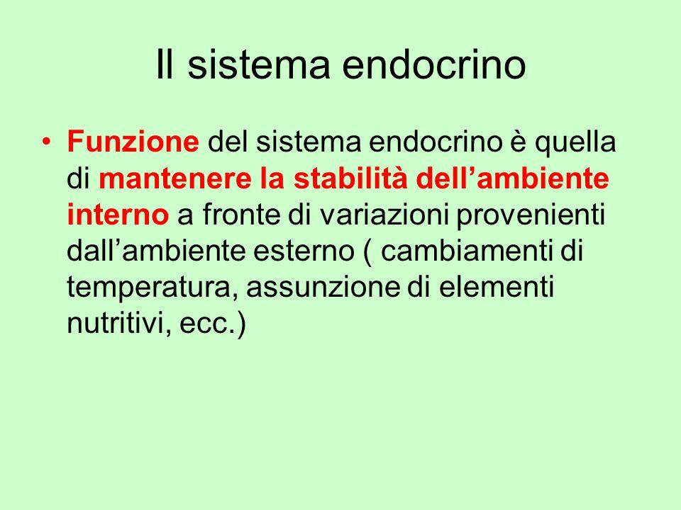 Il sistema endocrino Funzione del sistema endocrino è quella di mantenere la stabilità dellambiente interno a fronte di variazioni provenienti dallamb