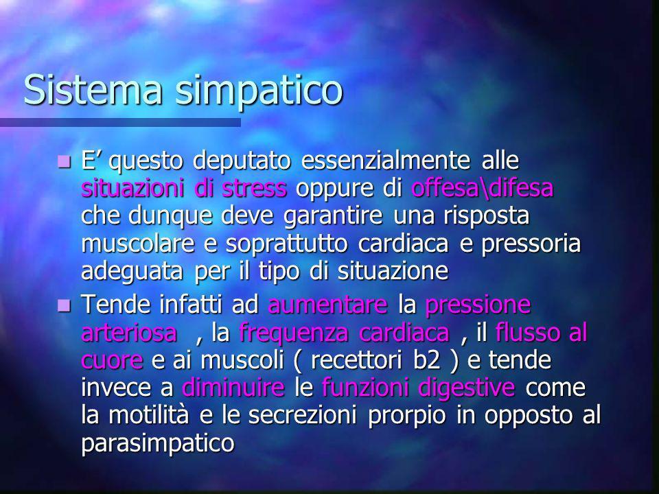 Meccanismo d azione del sistema simpatico Il sistema simpatico è anche chiamato sistema toraco-lombare proprio perché i neuroni d origine sono situati nella sezione toracolombare del MS Il sistema simpatico è anche chiamato sistema toraco-lombare proprio perché i neuroni d origine sono situati nella sezione toracolombare del MS Questi neuroni a differenza di quelli motrici somatici sono visceromotori e tendono ad innervare i visceri e soprattutto il SNA simpatico i mm piloerettori, le ghiandole sudoripare e la maggior parte dei vasi Questi neuroni a differenza di quelli motrici somatici sono visceromotori e tendono ad innervare i visceri e soprattutto il SNA simpatico i mm piloerettori, le ghiandole sudoripare e la maggior parte dei vasi