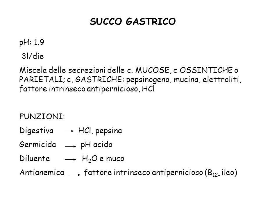 SUCCO GASTRICO pH: 1.9 3l/die Miscela delle secrezioni delle c. MUCOSE, c OSSINTICHE o PARIETALI; c, GASTRICHE: pepsinogeno, mucina, elettroliti, fatt