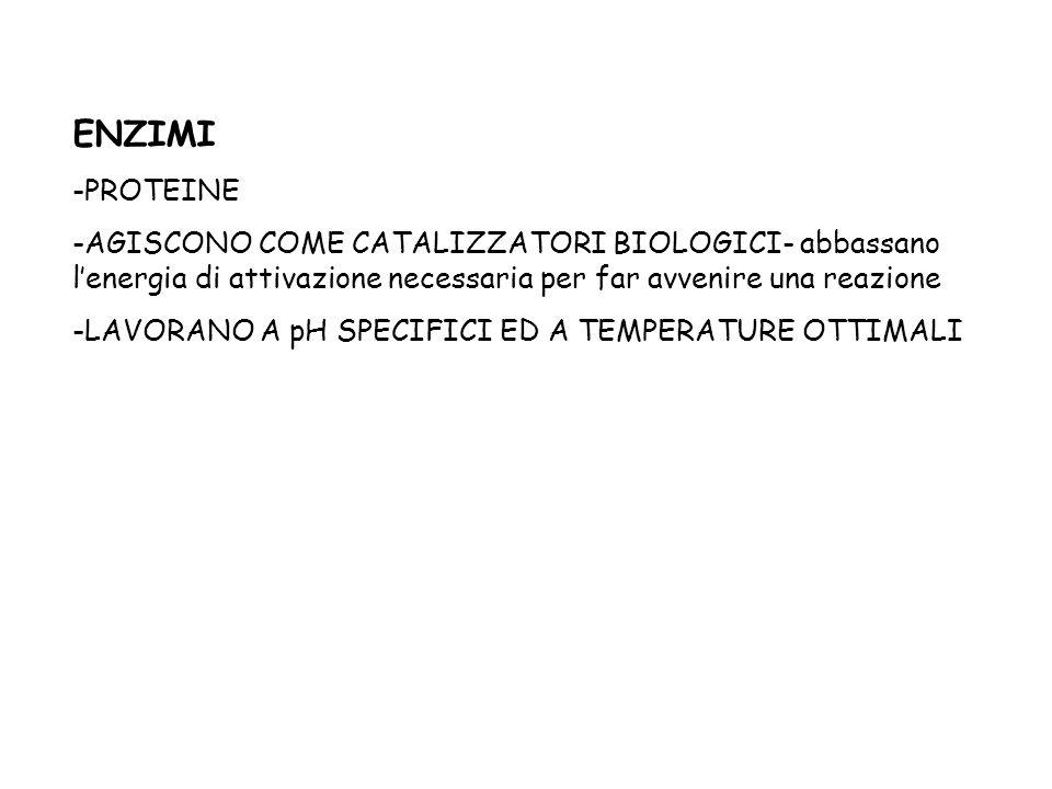 ENZIMI -PROTEINE -AGISCONO COME CATALIZZATORI BIOLOGICI- abbassano lenergia di attivazione necessaria per far avvenire una reazione -LAVORANO A pH SPE