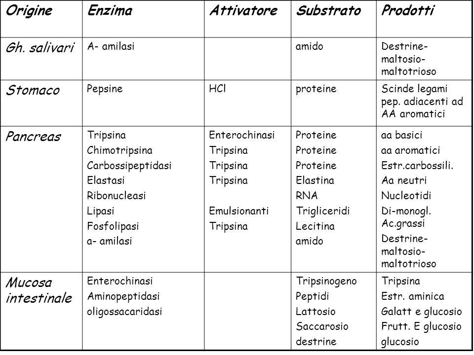 OrigineEnzimaAttivatoreSubstratoProdotti Gh. salivari A- amilasiamidoDestrine- maltosio- maltotrioso Stomaco PepsineHClproteineScinde legami pep. adia