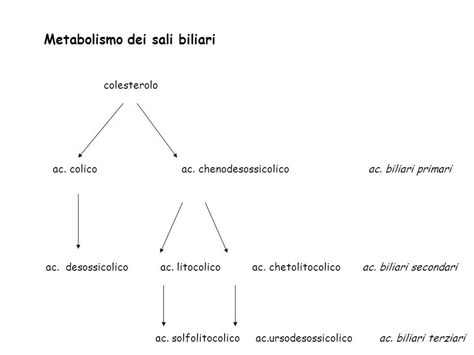 Metabolismo dei sali biliari colesterolo ac. colico ac. chenodesossicolico ac. biliari primari ac. desossicolico ac. litocolico ac. chetolitocolico ac