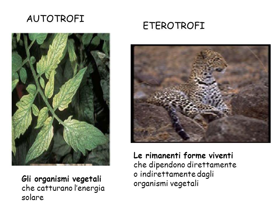 Gli organismi vegetali che catturano lenergia solare Le rimanenti forme viventi che dipendono direttamente o indirettamente dagli organismi vegetali A