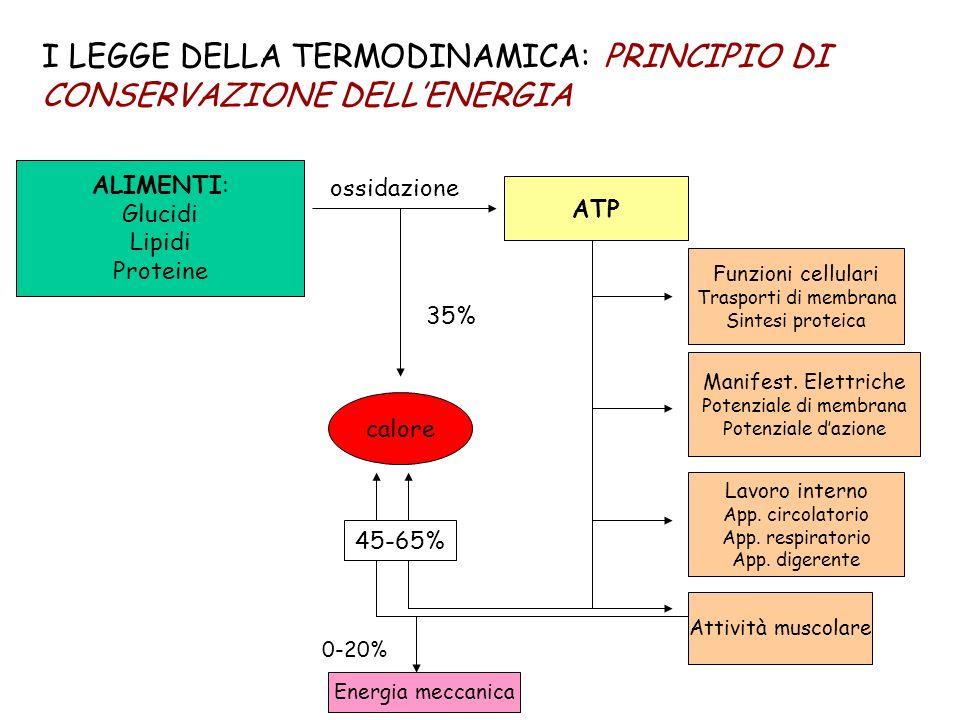 I LEGGE DELLA TERMODINAMICA: PRINCIPIO DI CONSERVAZIONE DELLENERGIA ALIMENTI: Glucidi Lipidi Proteine ossidazione ATP Manifest. Elettriche Potenziale