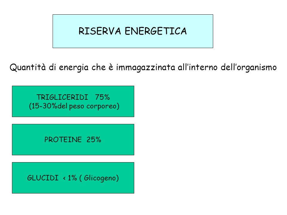 RISERVA ENERGETICA TRIGLICERIDI 75% (15-30%del peso corporeo) PROTEINE 25% GLUCIDI < 1% ( Glicogeno) Quantità di energia che è immagazzinata allintern